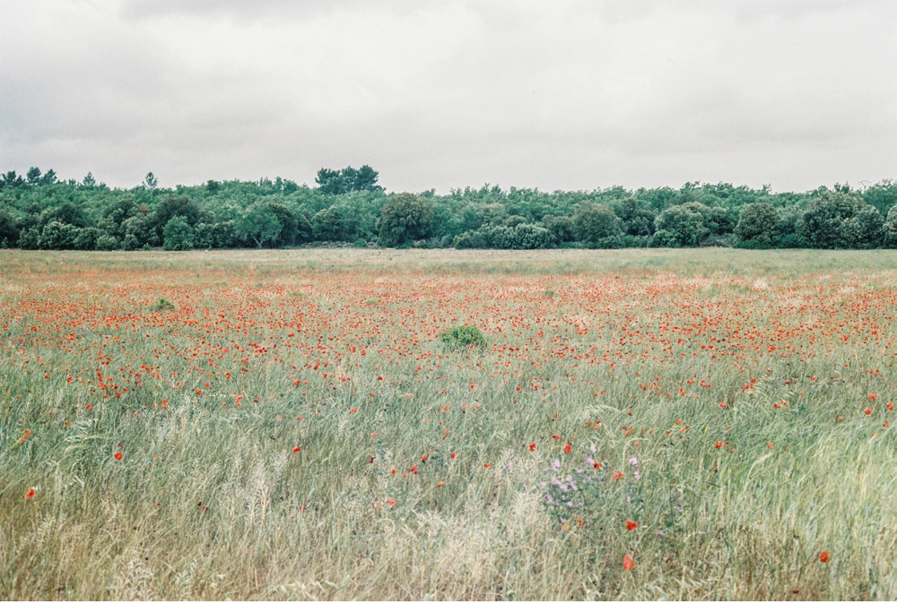 Provence_France_WeddingPhotographer©MadalinaSheldon_0088.jpg