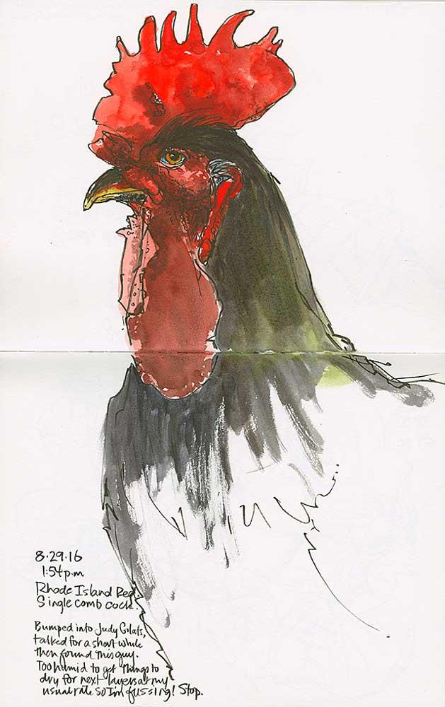 17pro11-rhode-island-red-rooster.jpg
