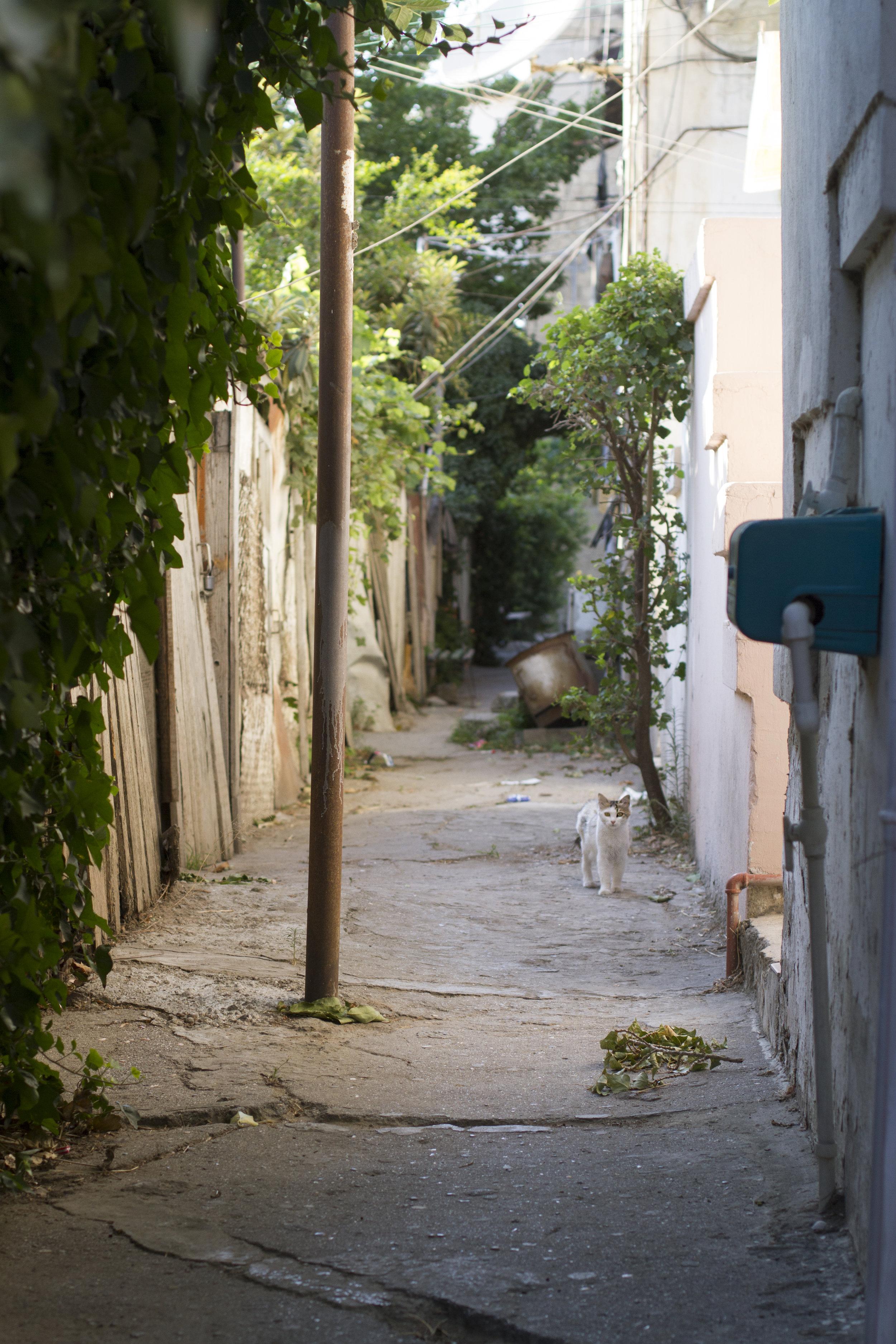 Urban decay 6.jpg