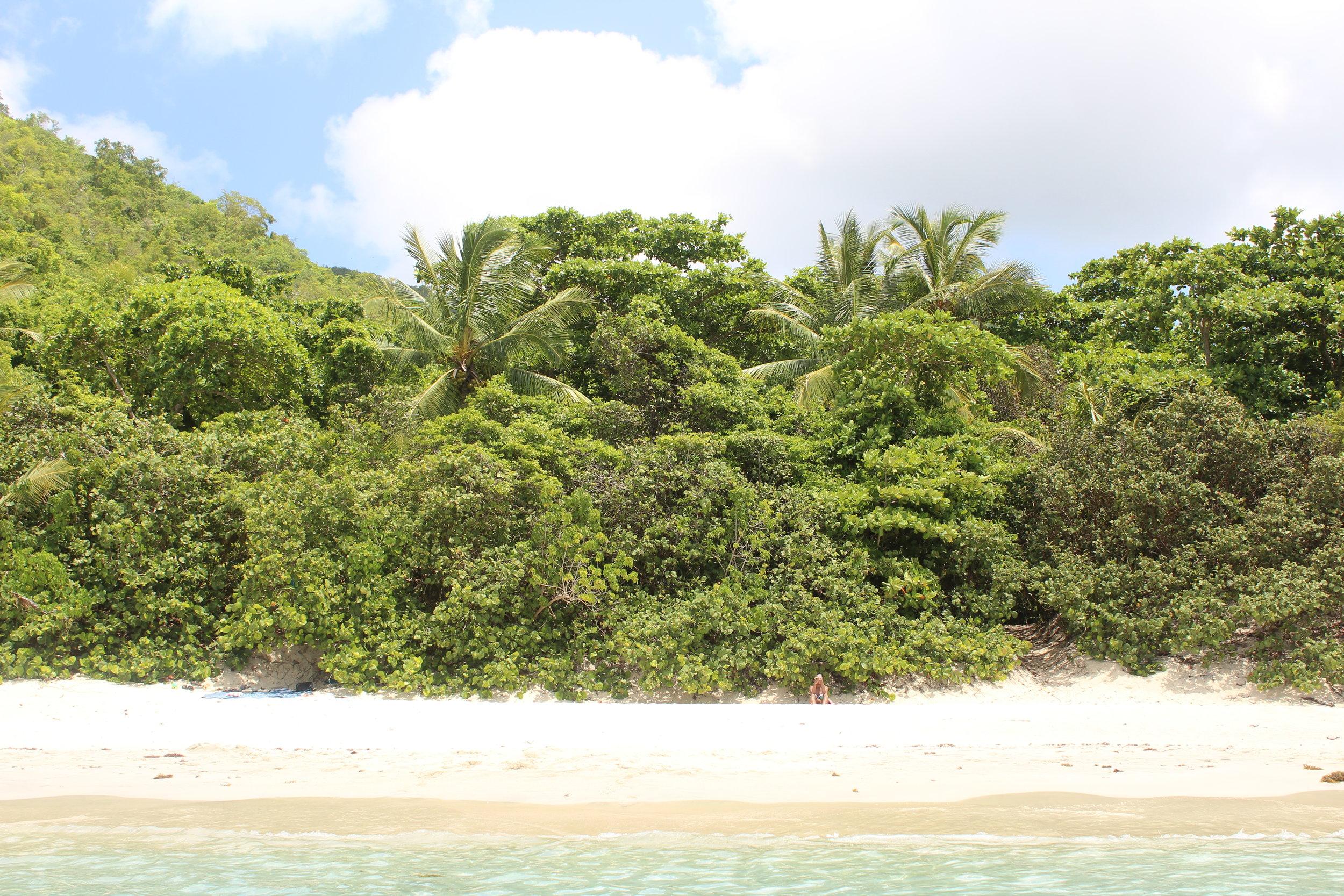 cinnamon Bay Beach 2.jpg