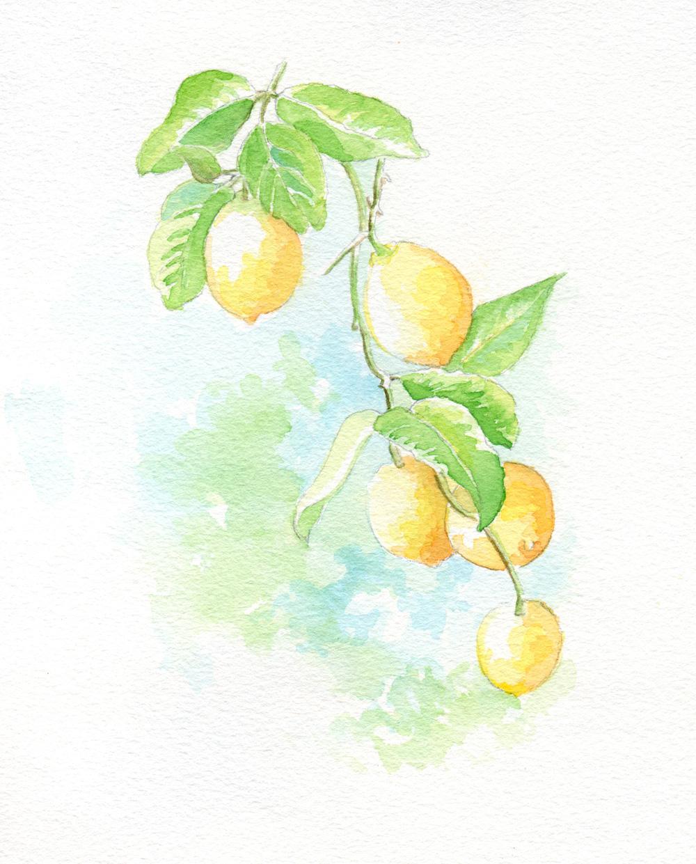 Lemon branch illus_blog.jpg