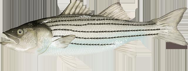 www.fishwatch.gov