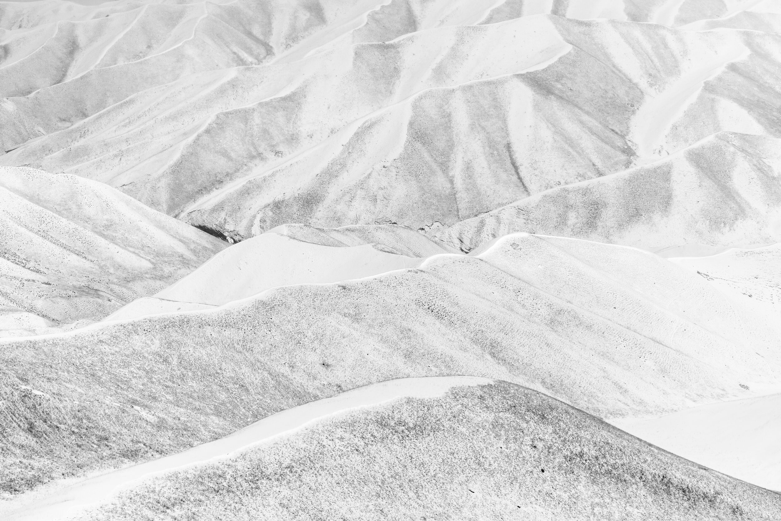 Horse Head #1A - Foto geprint op Fine Art Pearl Baryta (Satin) 285gsm Papier - 40 x 60 cm - 60 x 90 cm - 90 x 135 cm - 135 x 195 cm