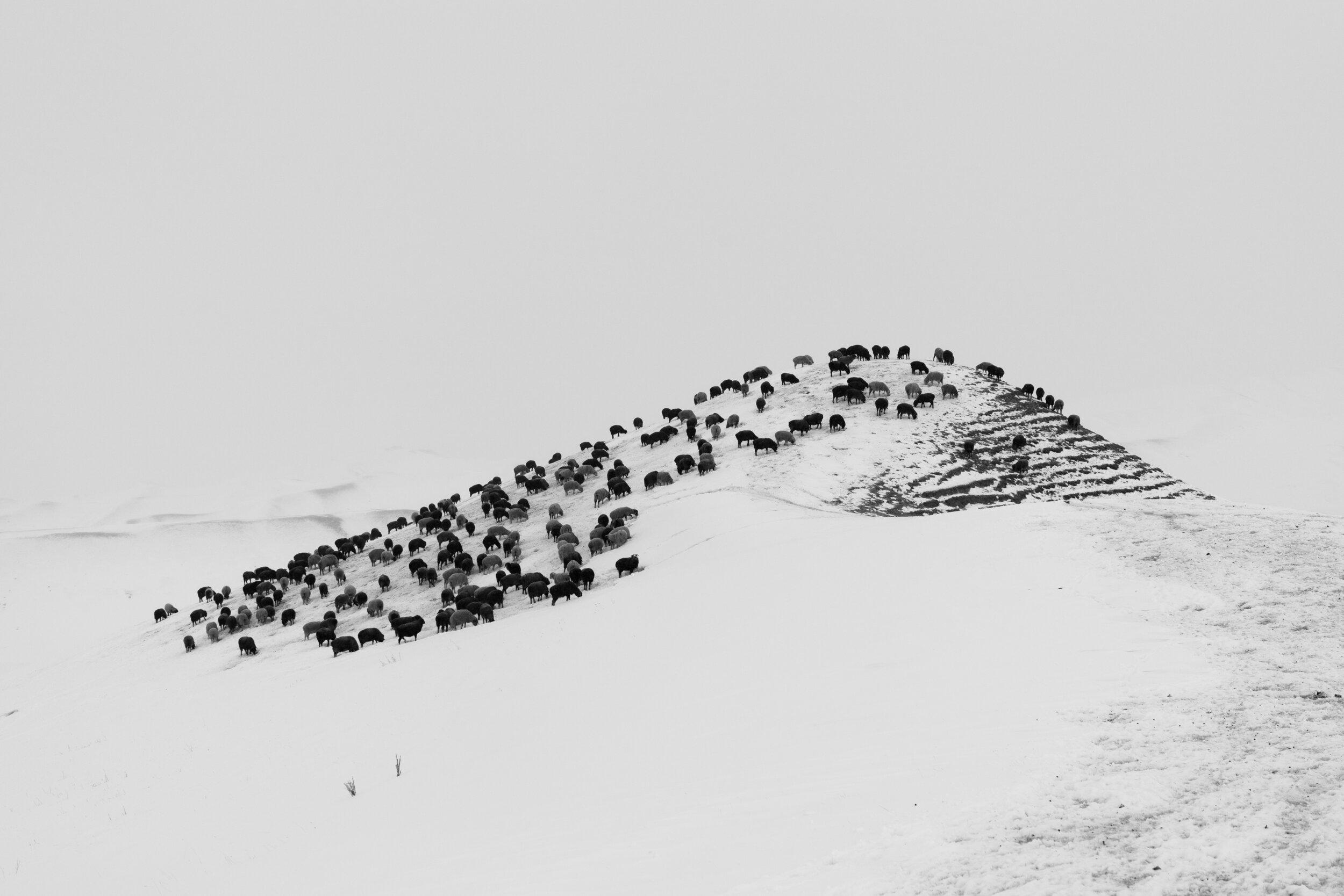 Horse Head #18 - Foto geprint op Fine Art Pearl Baryta (Satin) 285gsm Papier - 40 x 60 cm - 60 x 90 cm - 90 x 135 cm - 135 x 195 cm