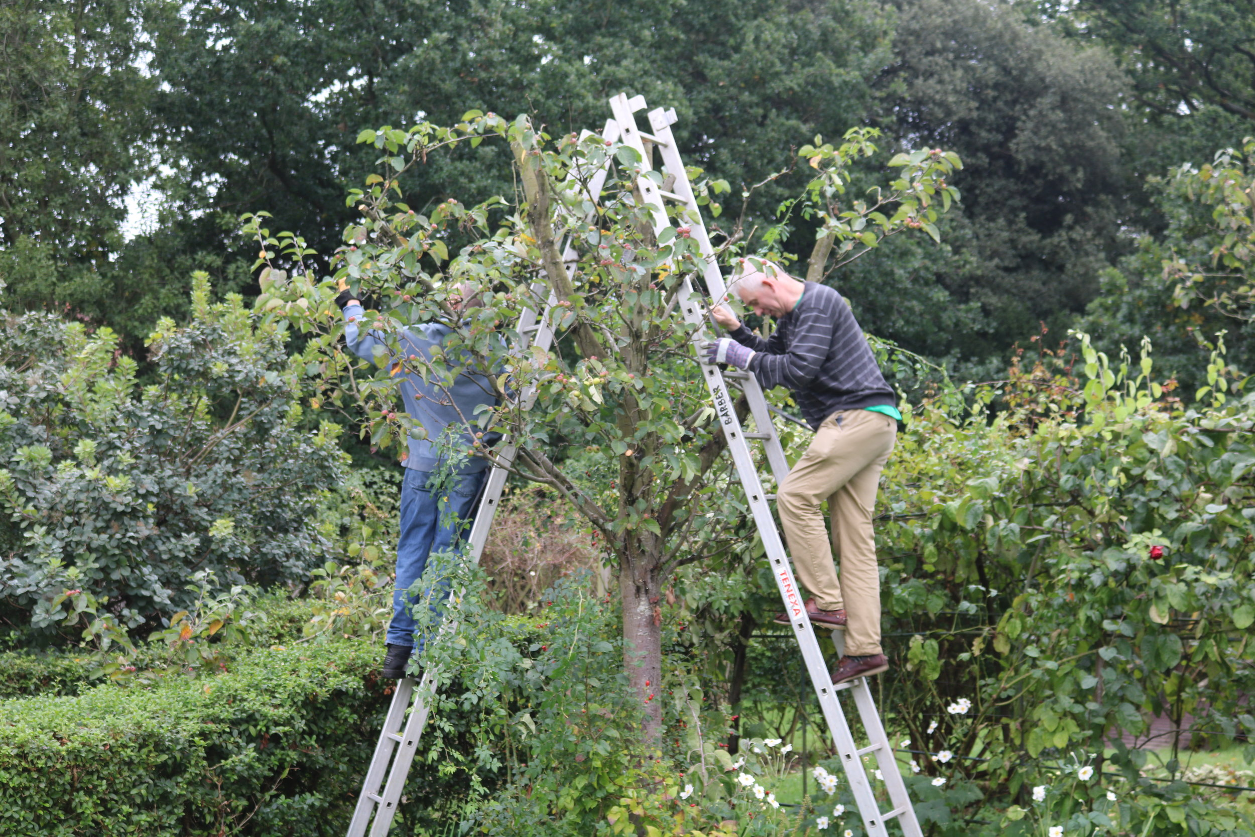Angus and John pruning.JPG