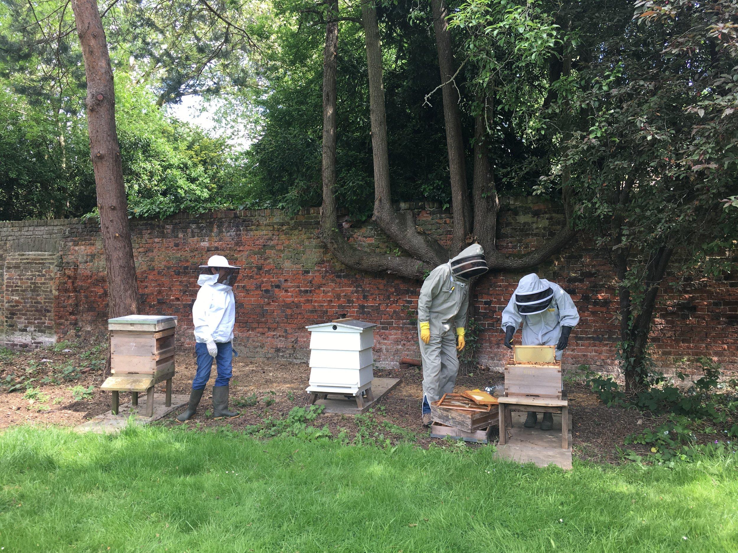 Bell House beekeeping