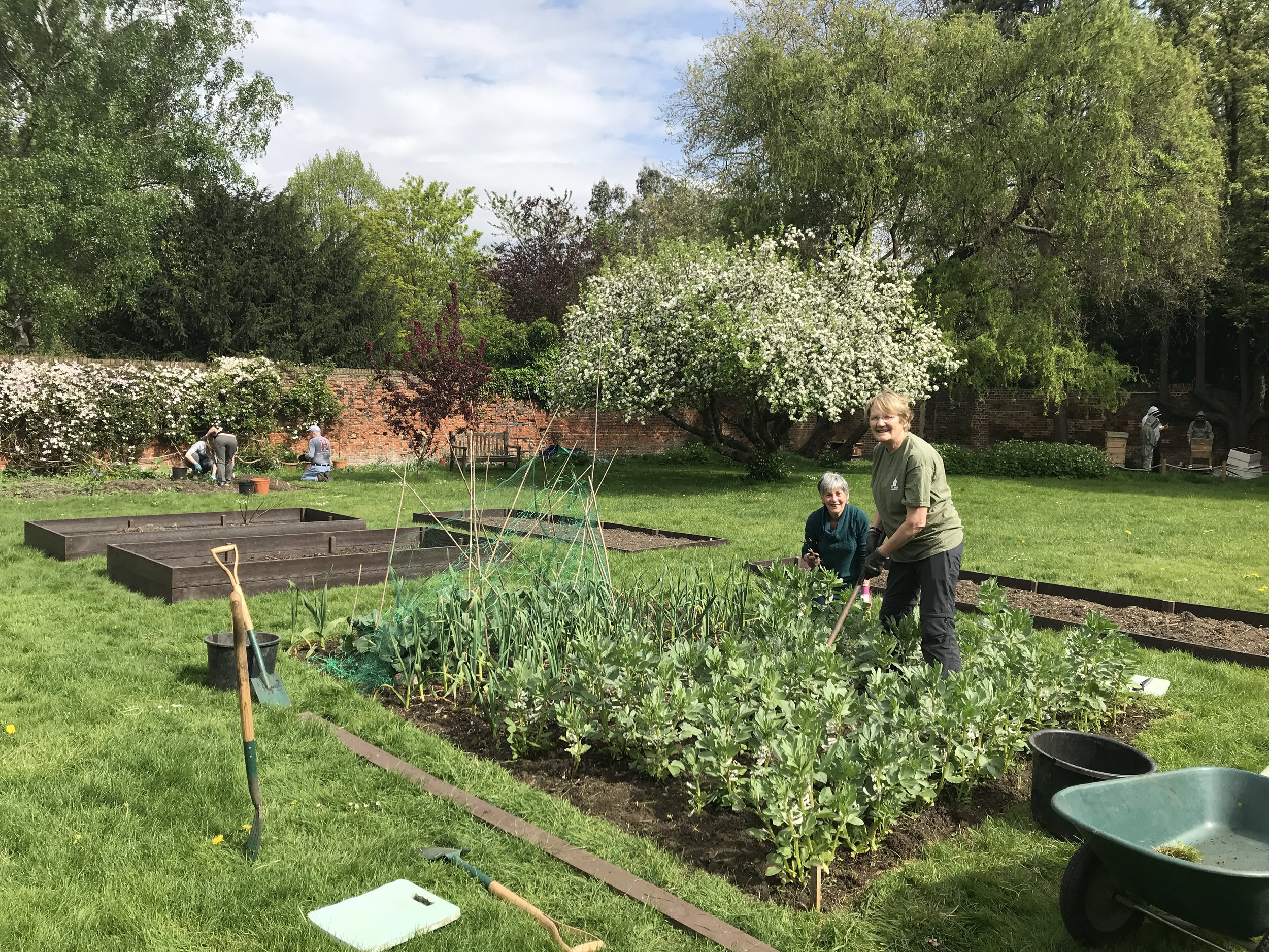Volunteers tending the vegetables beds in the Bell House walled garden