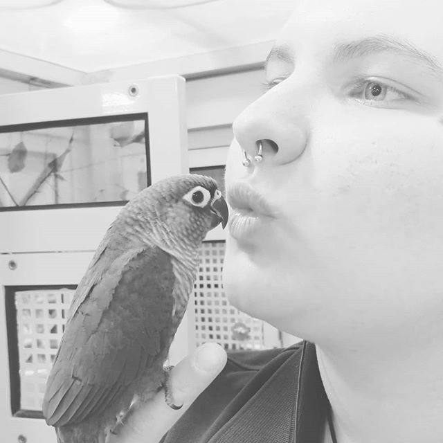 When you ask a conure for a kiss but they go for the nose ring instead. #heihei #conure #conurelove #birdtraining