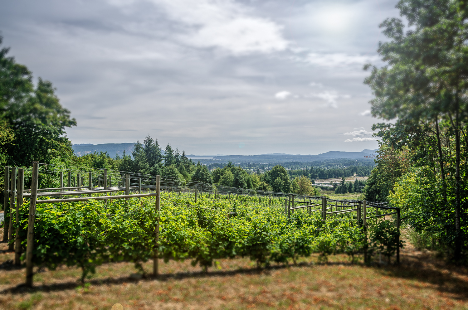 Averill Creek Vineyard View of The Cowichan Valley