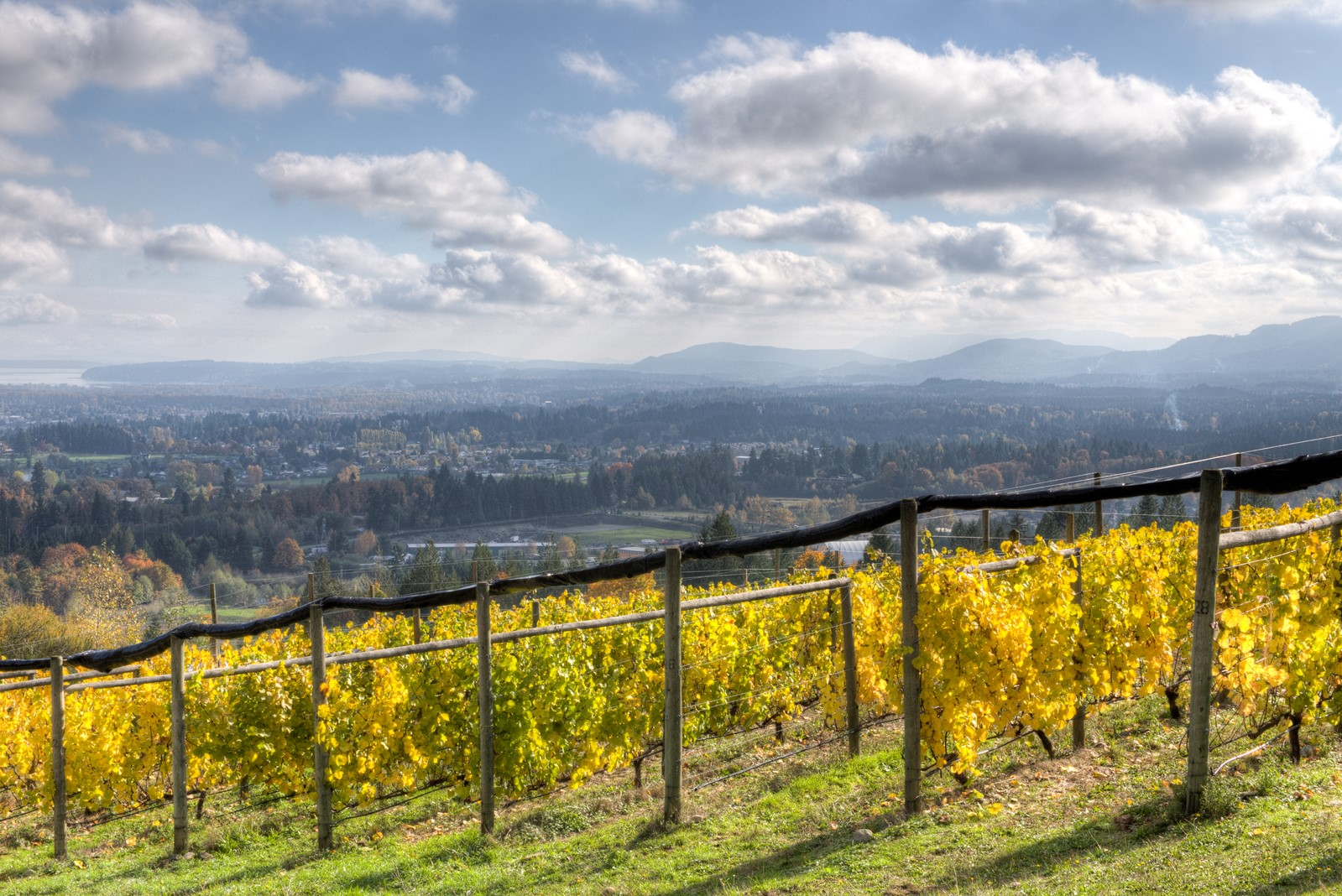 Averill Creek Vineyard in Autumn