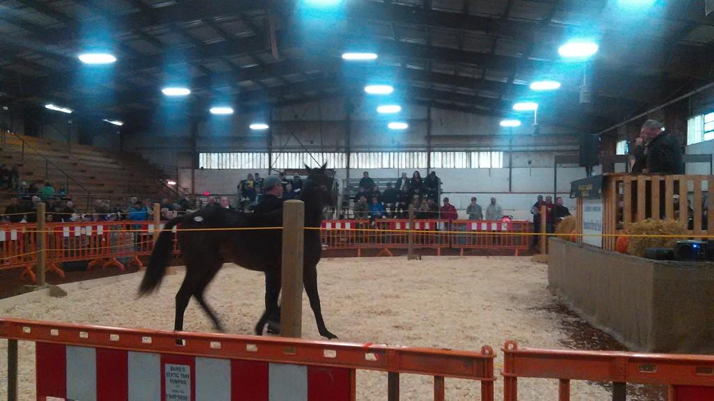 horse-1024x576.jpg