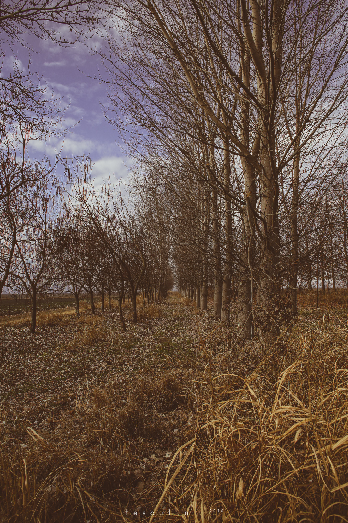 tesoulin_worked-nature-3
