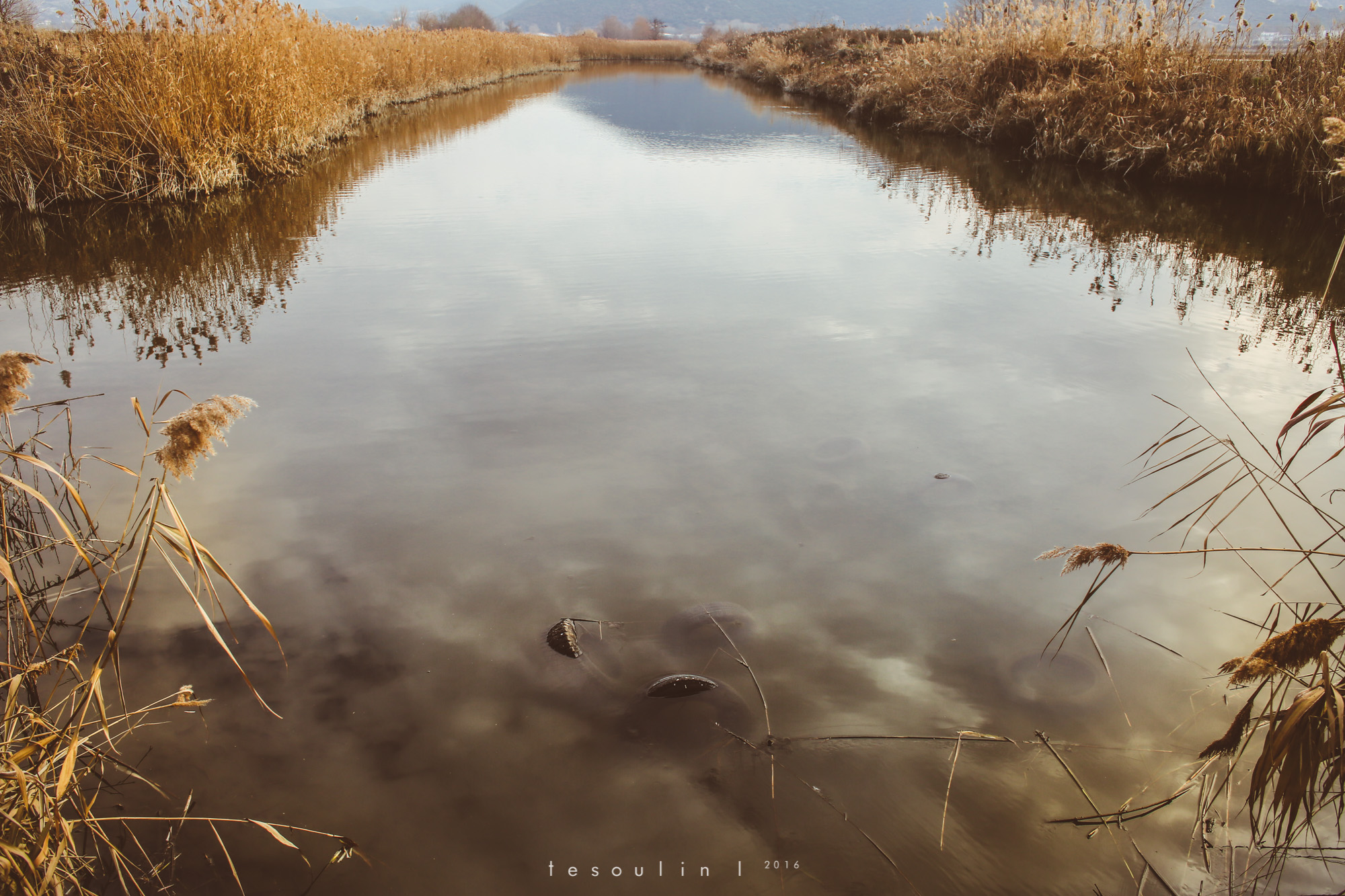 tesoulin_worked-nature-4