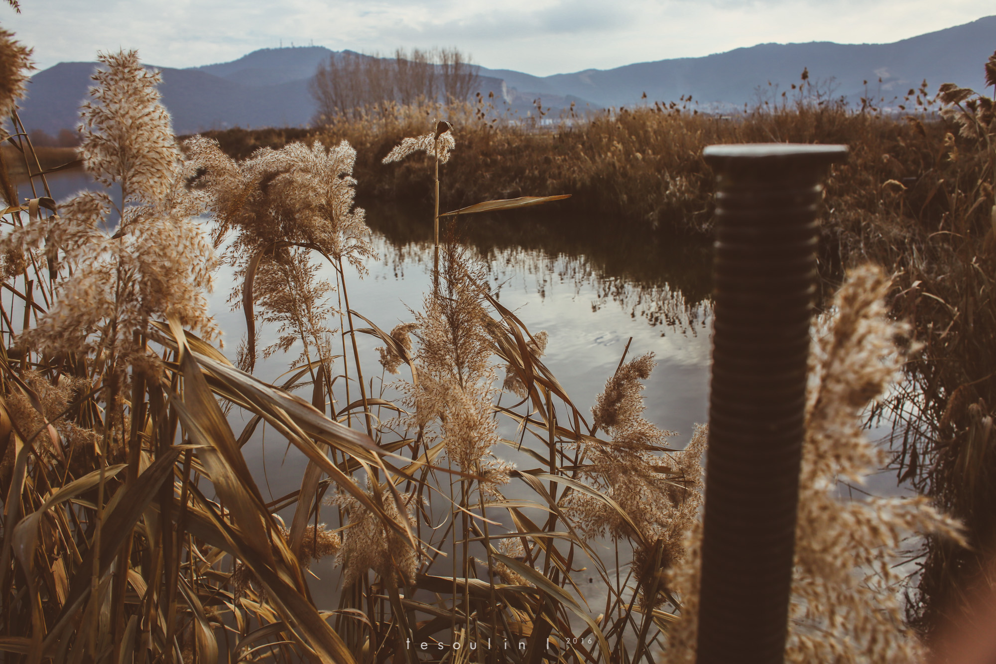 tesoulin_worked-nature-5