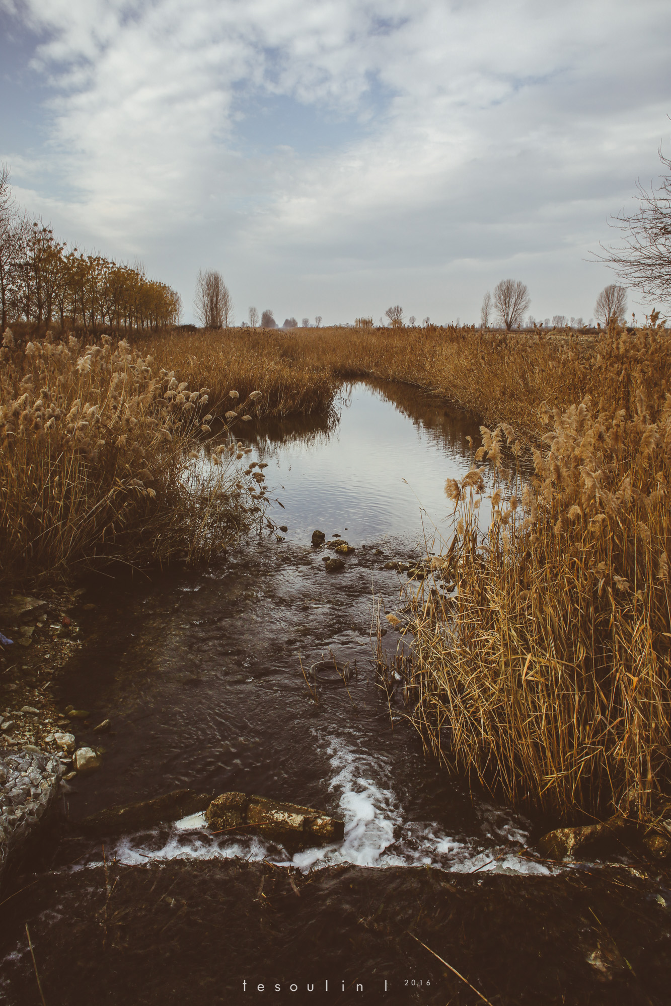tesoulin_worked-nature-6