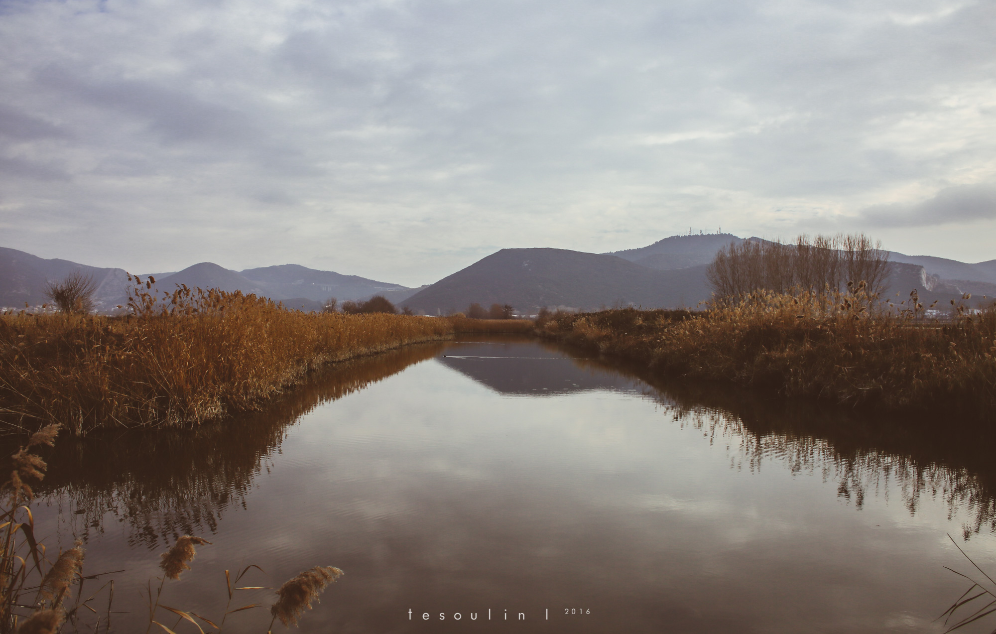 tesoulin_worked-nature-7