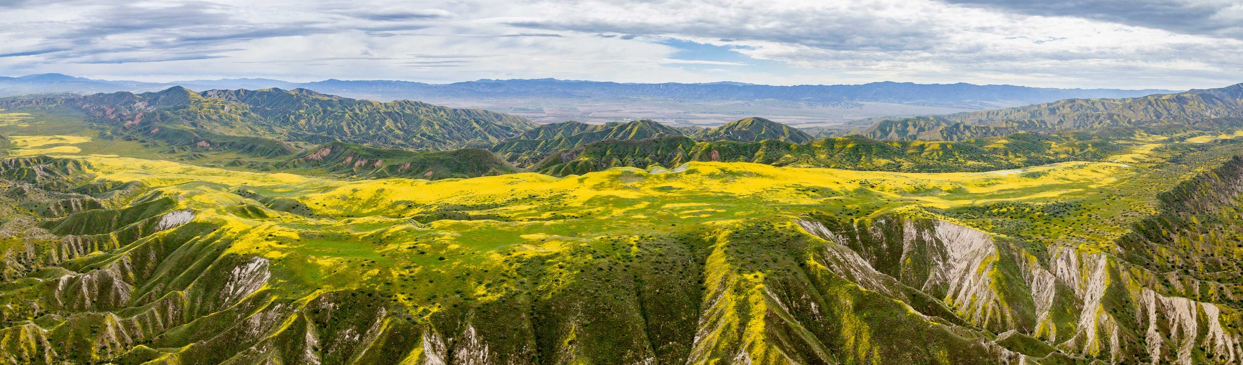 Brilliant yellow wildflowers stretch for miles on the Carrizo Plain, south of San Luis Obispo, CA.