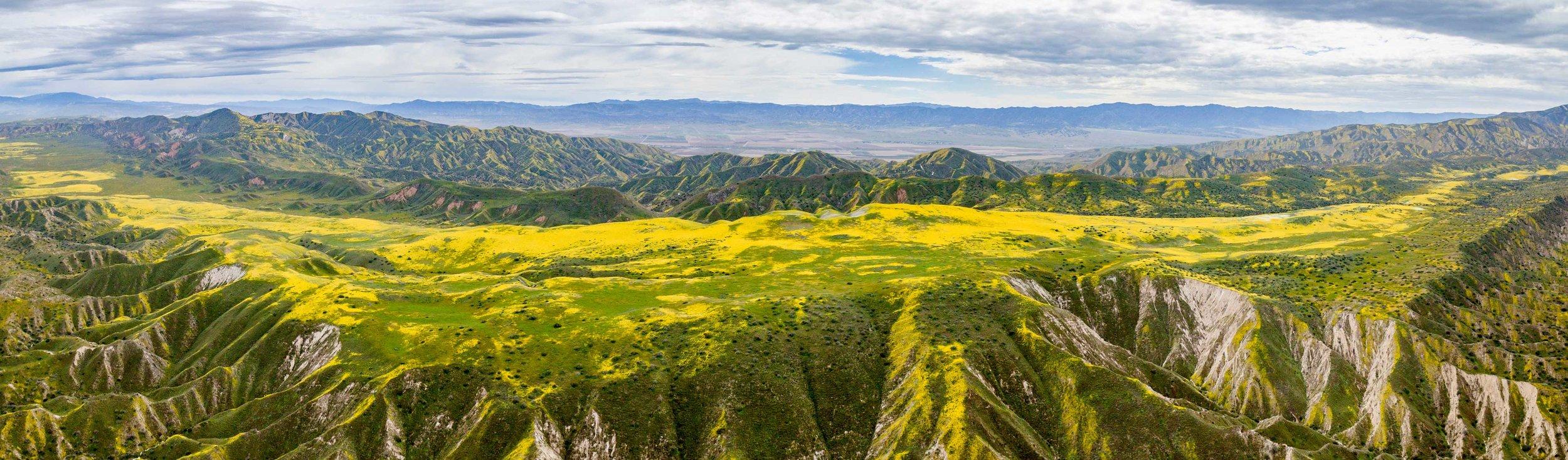 Brilliant yellow wildflowers stretch for miles on the Carrizo Plain, south of San Luis Obispo, CA.