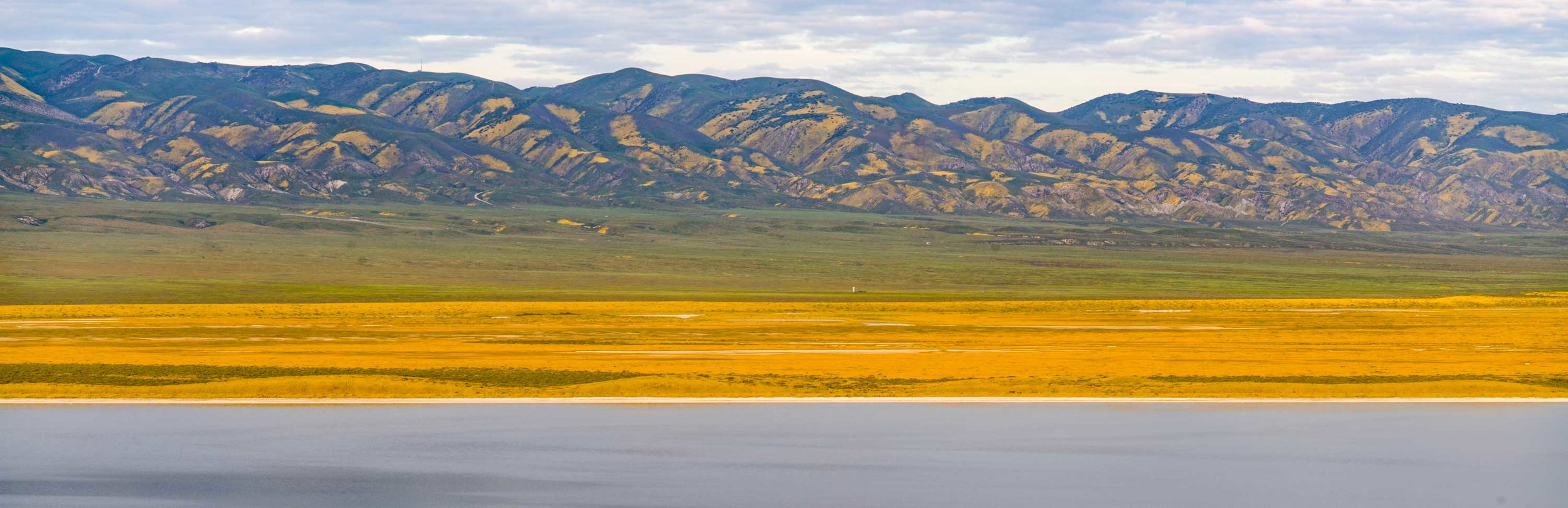 Layers of wildflowers cover the plains and mountains at Soda Lake in San Bernardino County, CA.