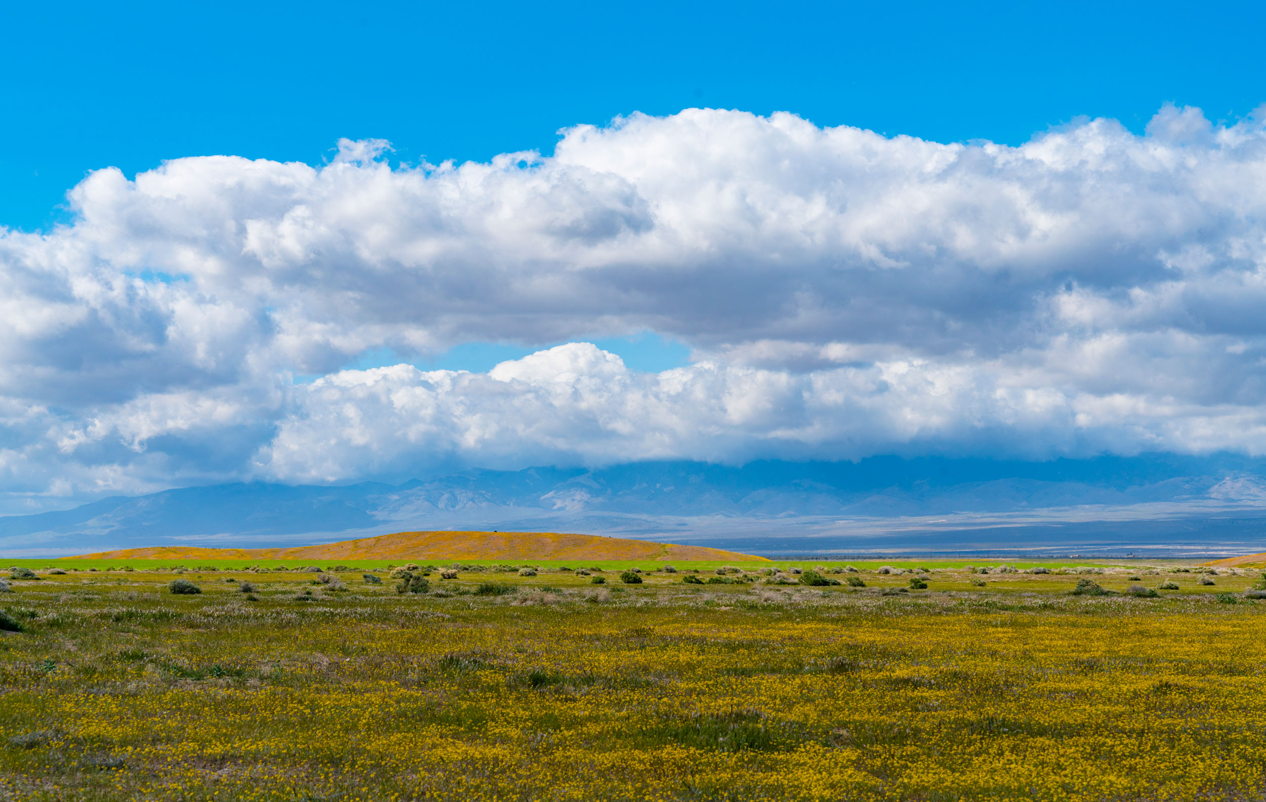 The poppy-laden hills of Antelope Valley come into view