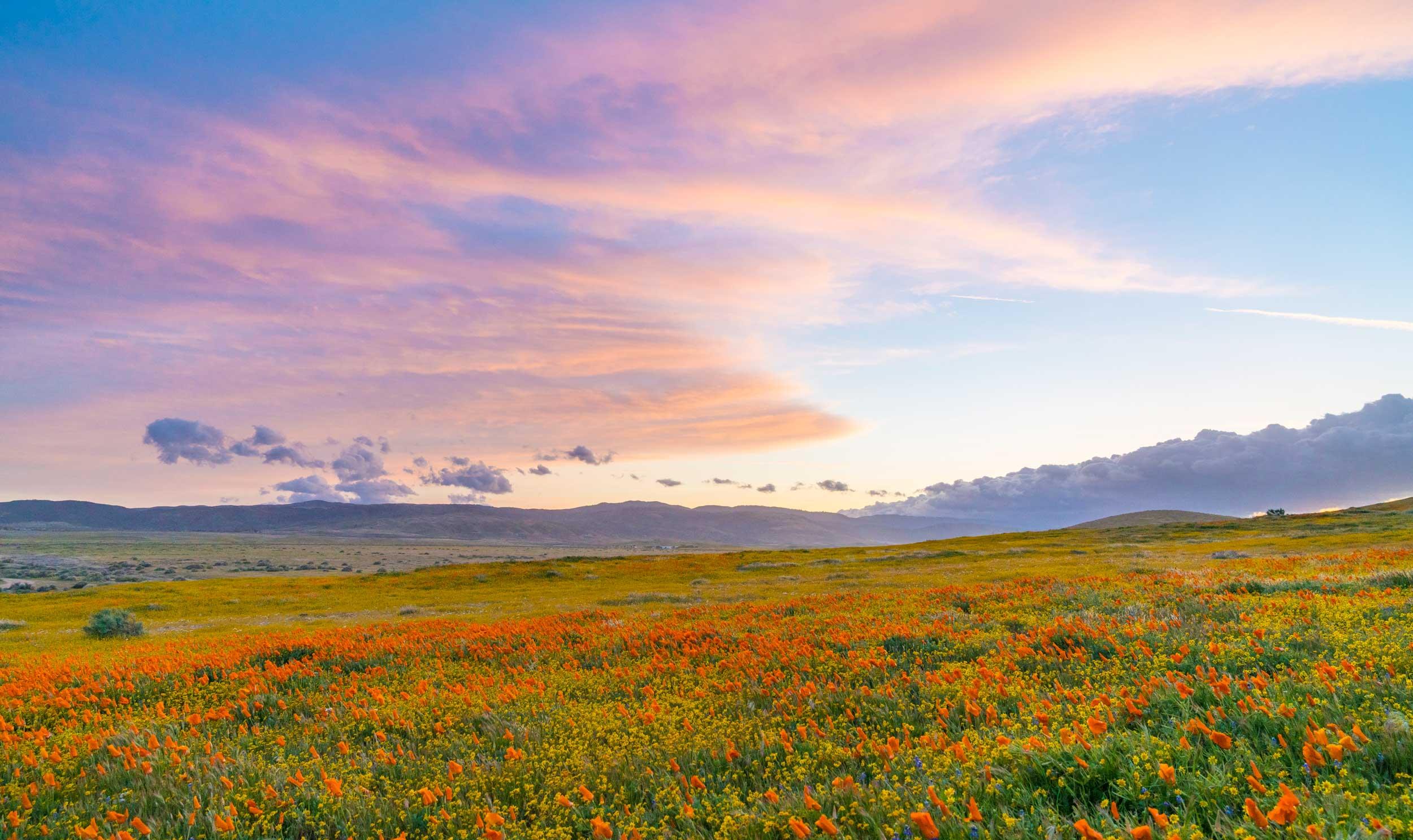 Goodbye Antelope Valley