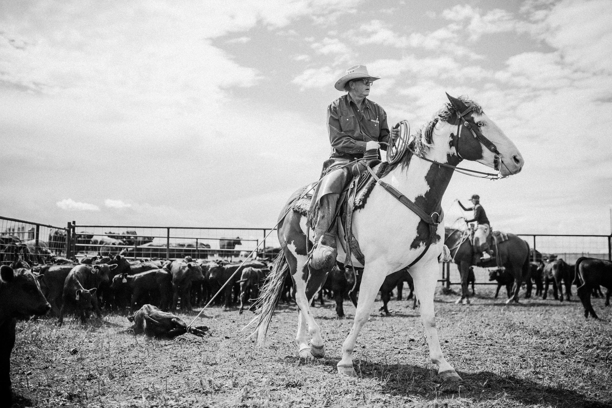 Gord Wilson- Cowboy