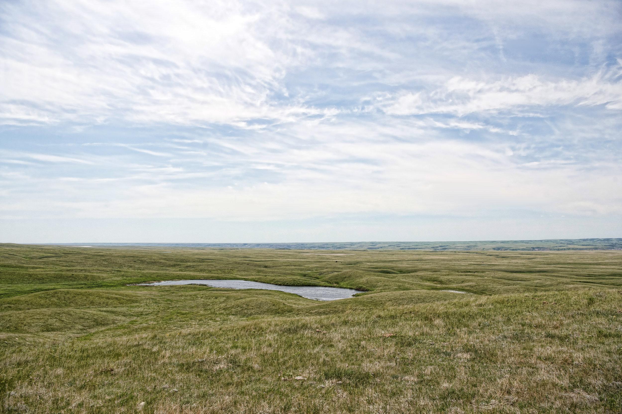 Pasture at Fish Lake Ranch
