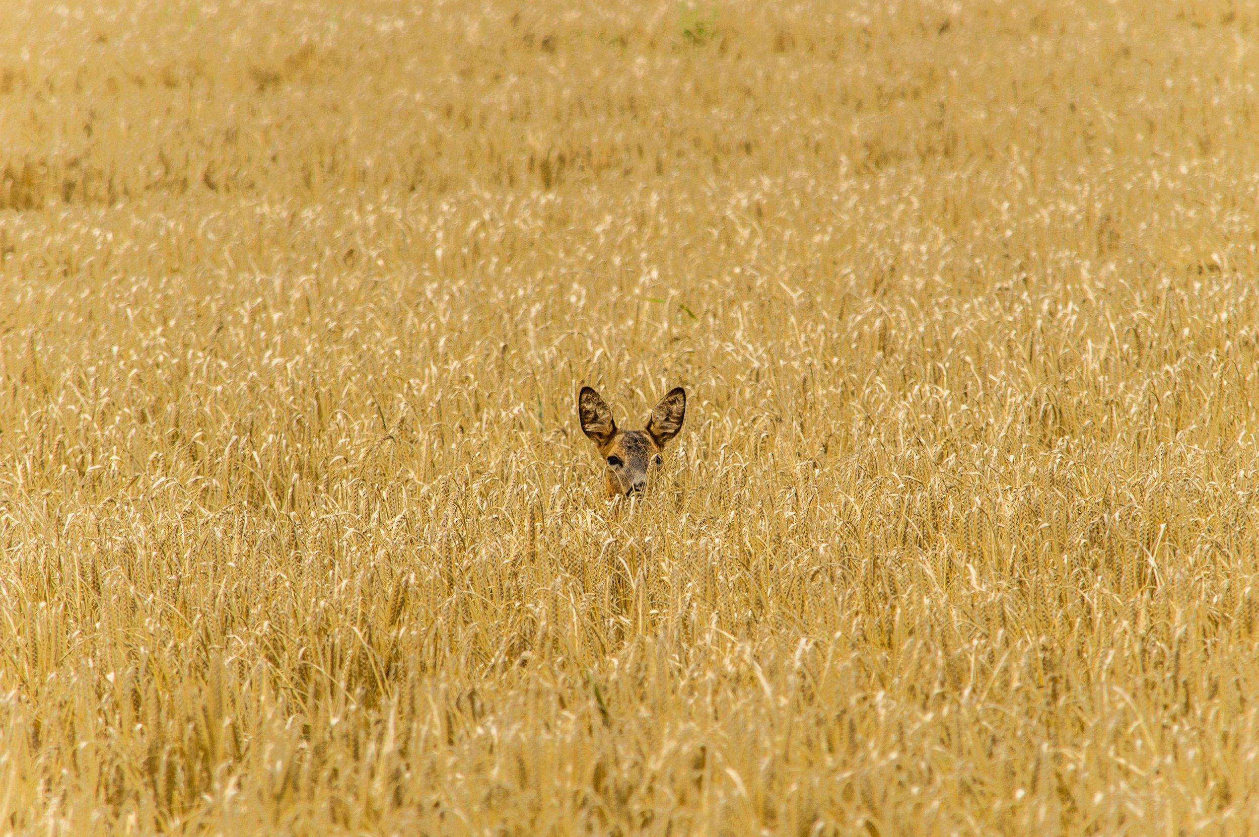 hannes-wolf-572757-unsplash.jpg