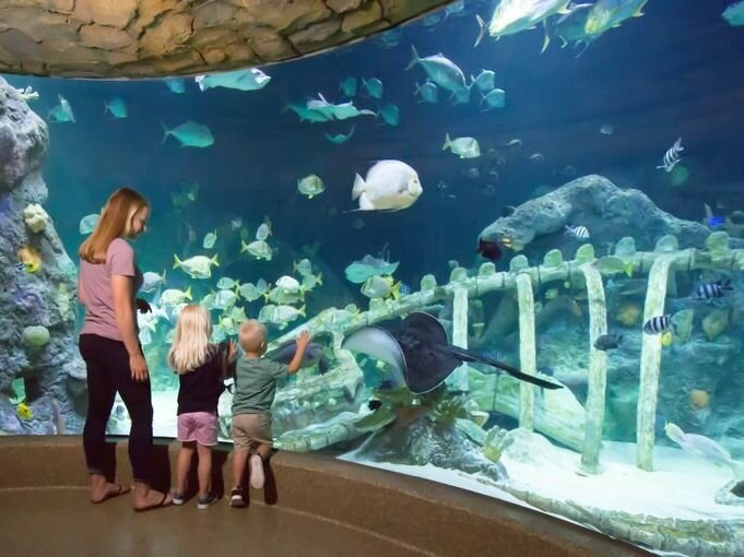 Sea Life Kansas City - The Sea Life Aquarium offers aquarium exhibits, a rockpool experience, a sea dragon exhibit, a 180 degree ocean tunnel, a stringray bay, and more. They are open 365 days a year and offer discounts for purchasing tickets online.