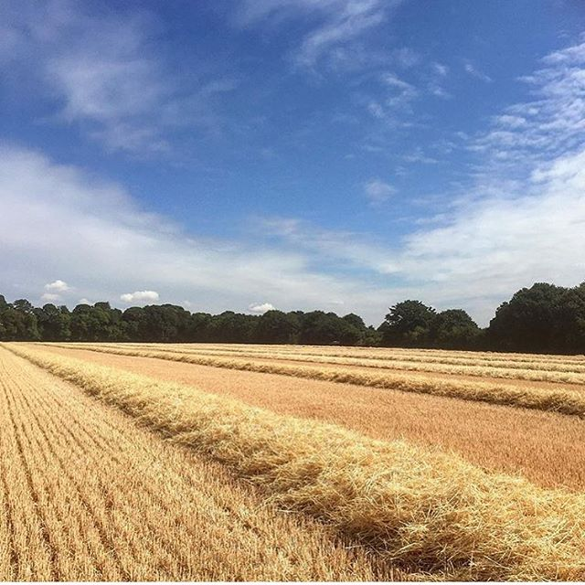 The beautiful South Downs, the source of our exceptional Natural Mineral Water. Endless golden fields being harvested #southdowns #southdownsway #southcoast #southdownswater #bottledwater #healthyhydration