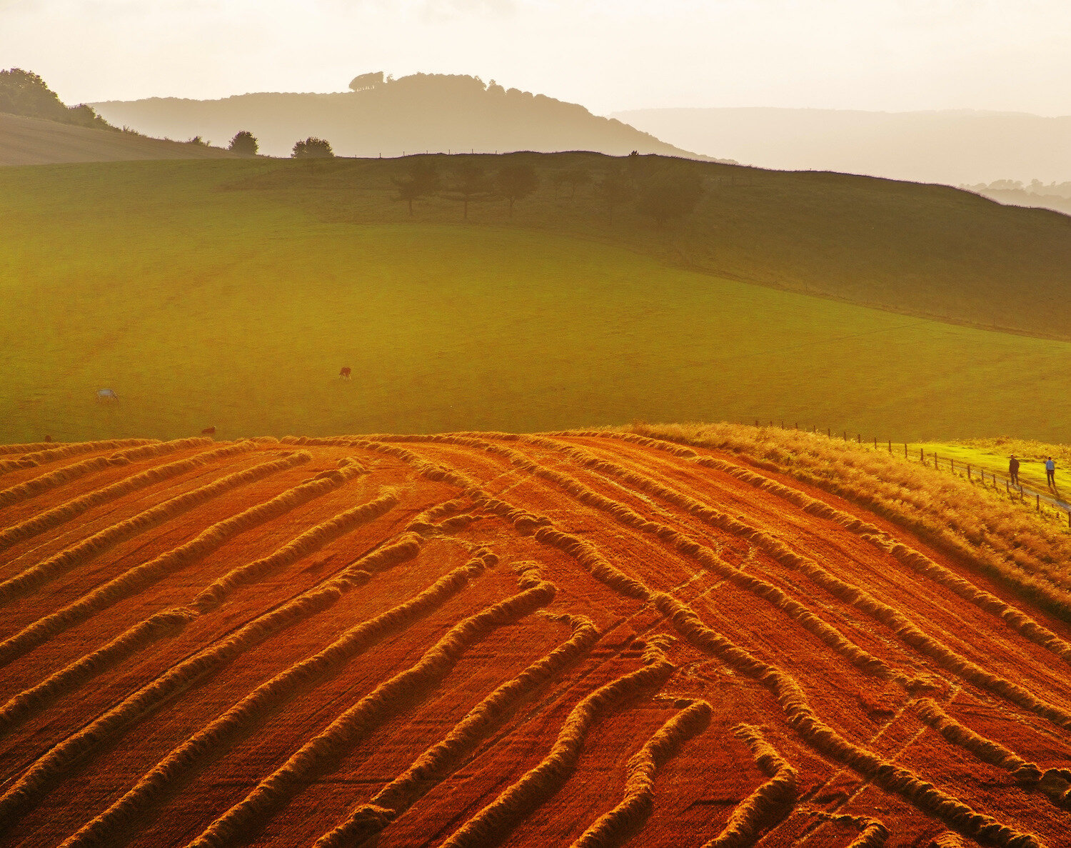day-out-in-southdowns-national-park.jpg