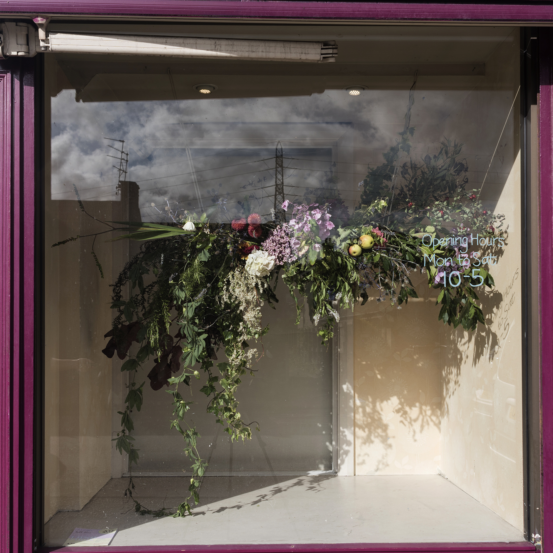 'Glasshouse' A botanical collaboration. Friday 6th September 2019  Flowers by Jenny Bell Harman, Photograph by Alicia Bruce