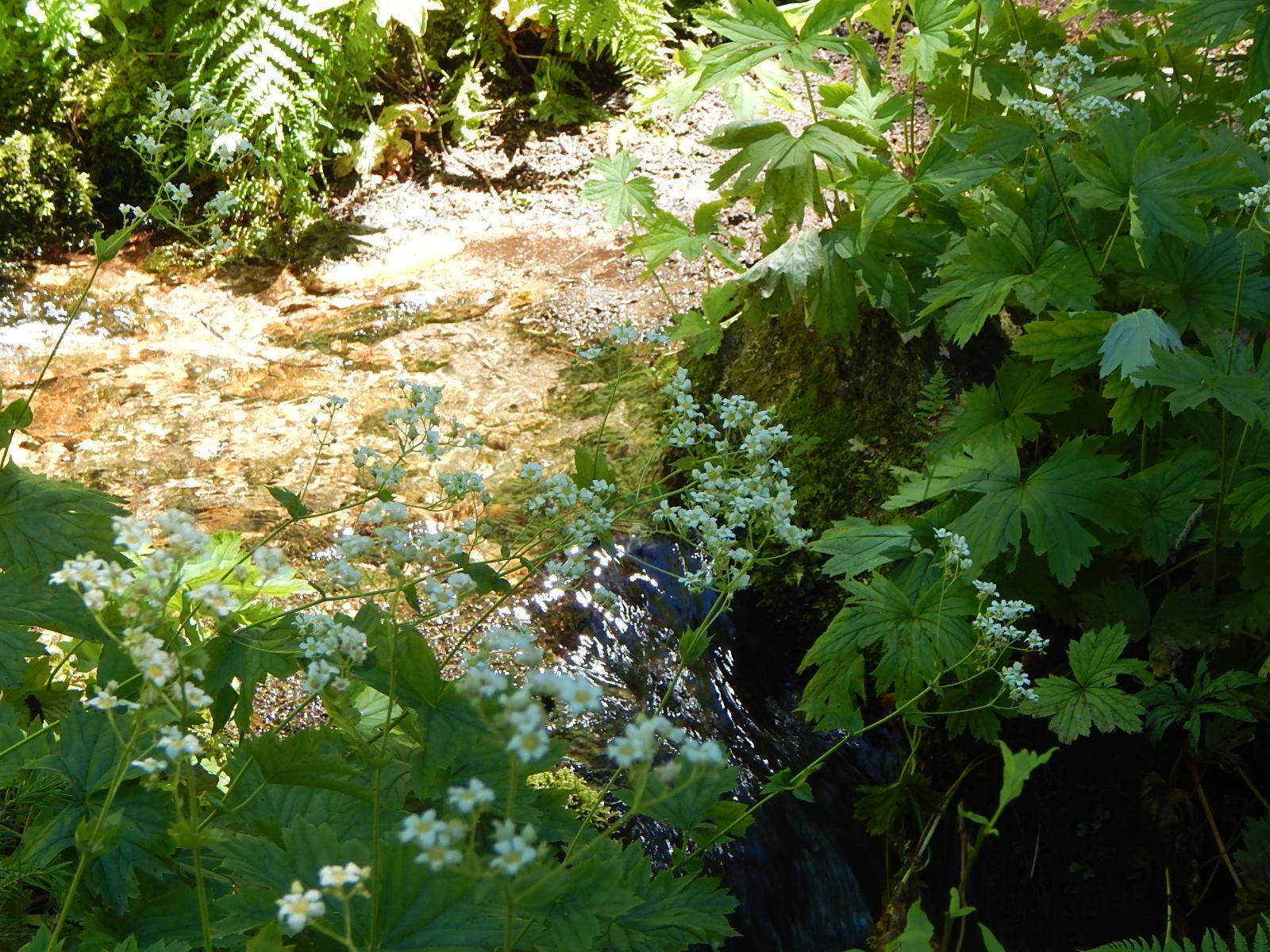 mountain flora.JPG