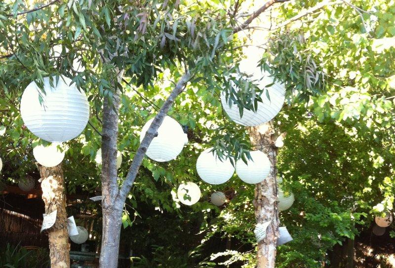lantern trees.jpg