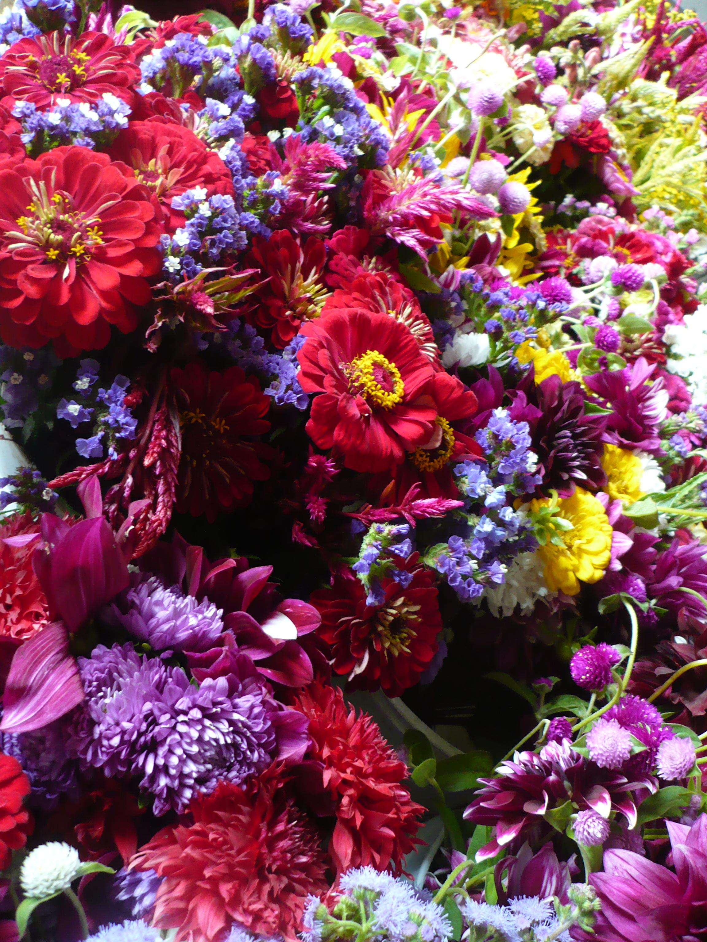 lily fall 2008 139.JPG