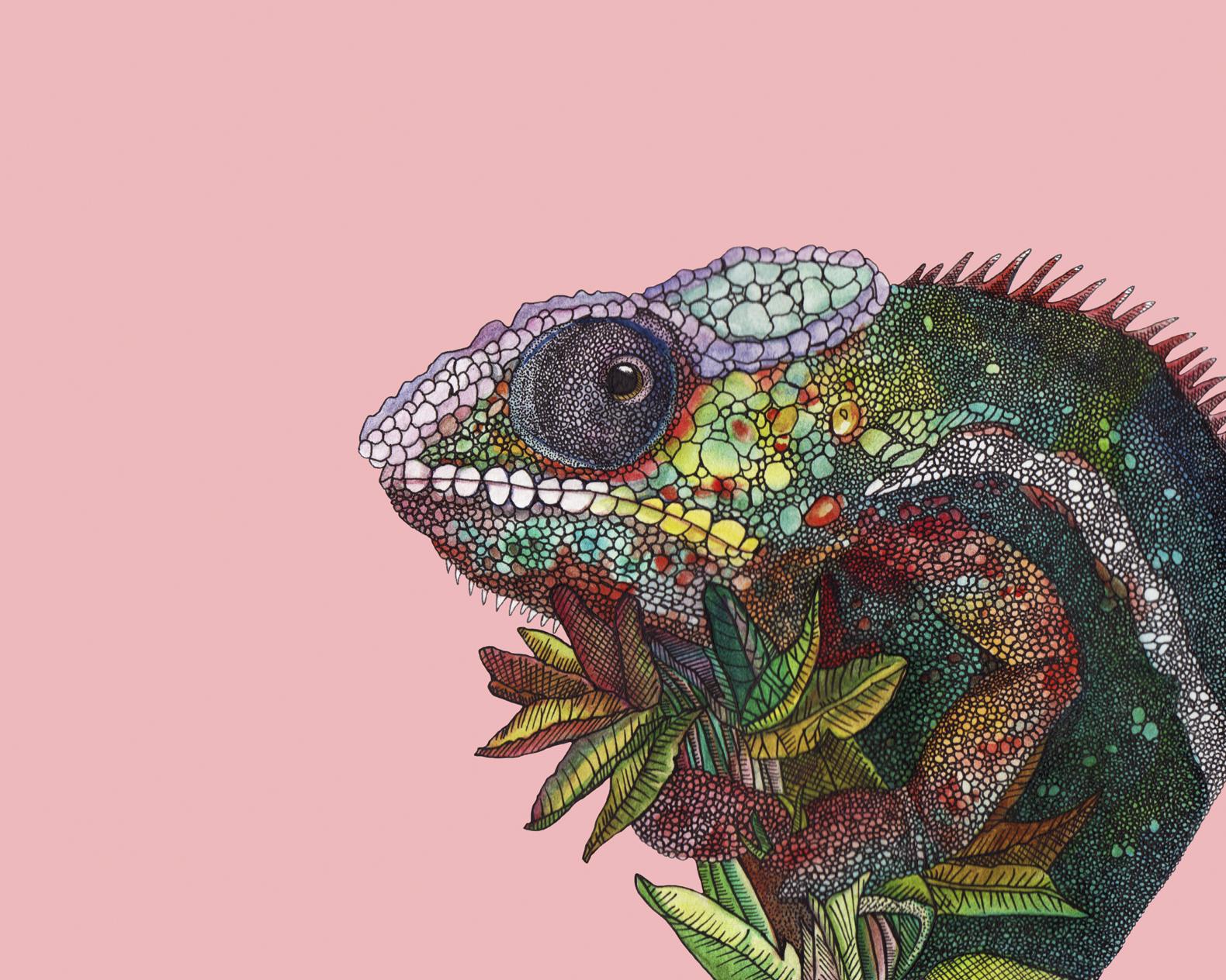 chameleon8x10.jpg