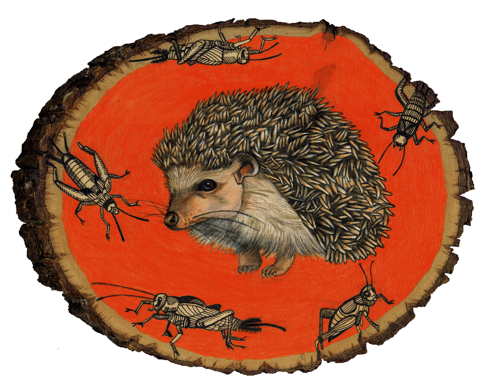 hedgehog 8x10.jpg