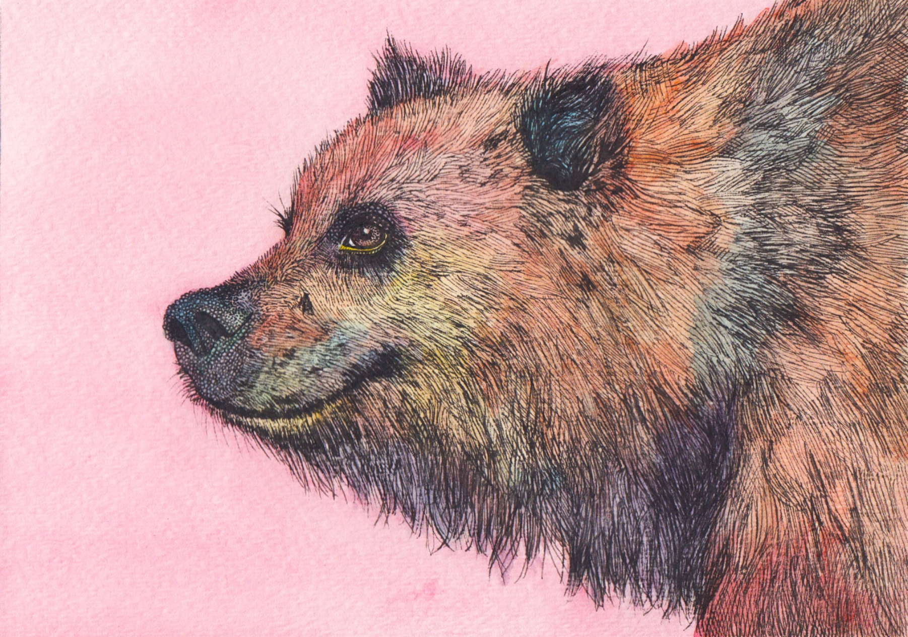 bear-final.jpg