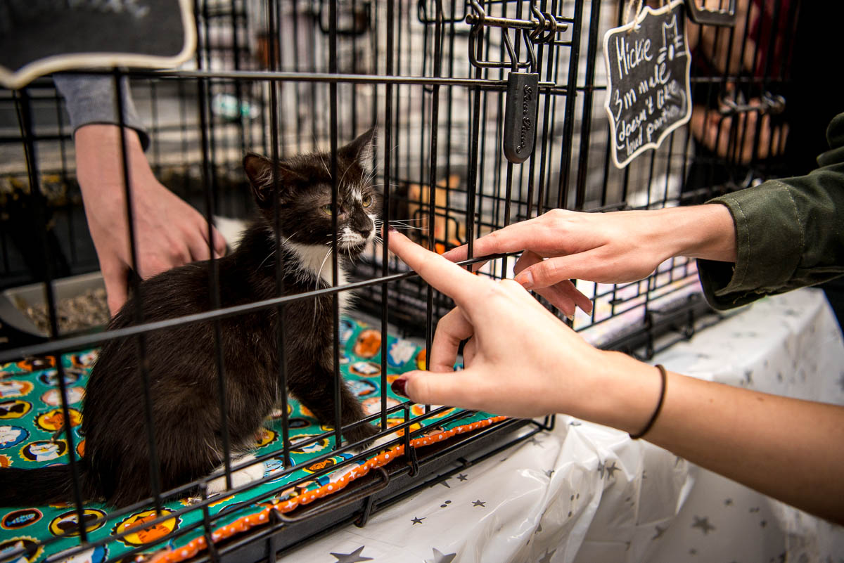 People interact with an adoptable cat named Mickie during Meowmania 2018 at Pine Box Rock Shop on Saturday, July 21, 2018.
