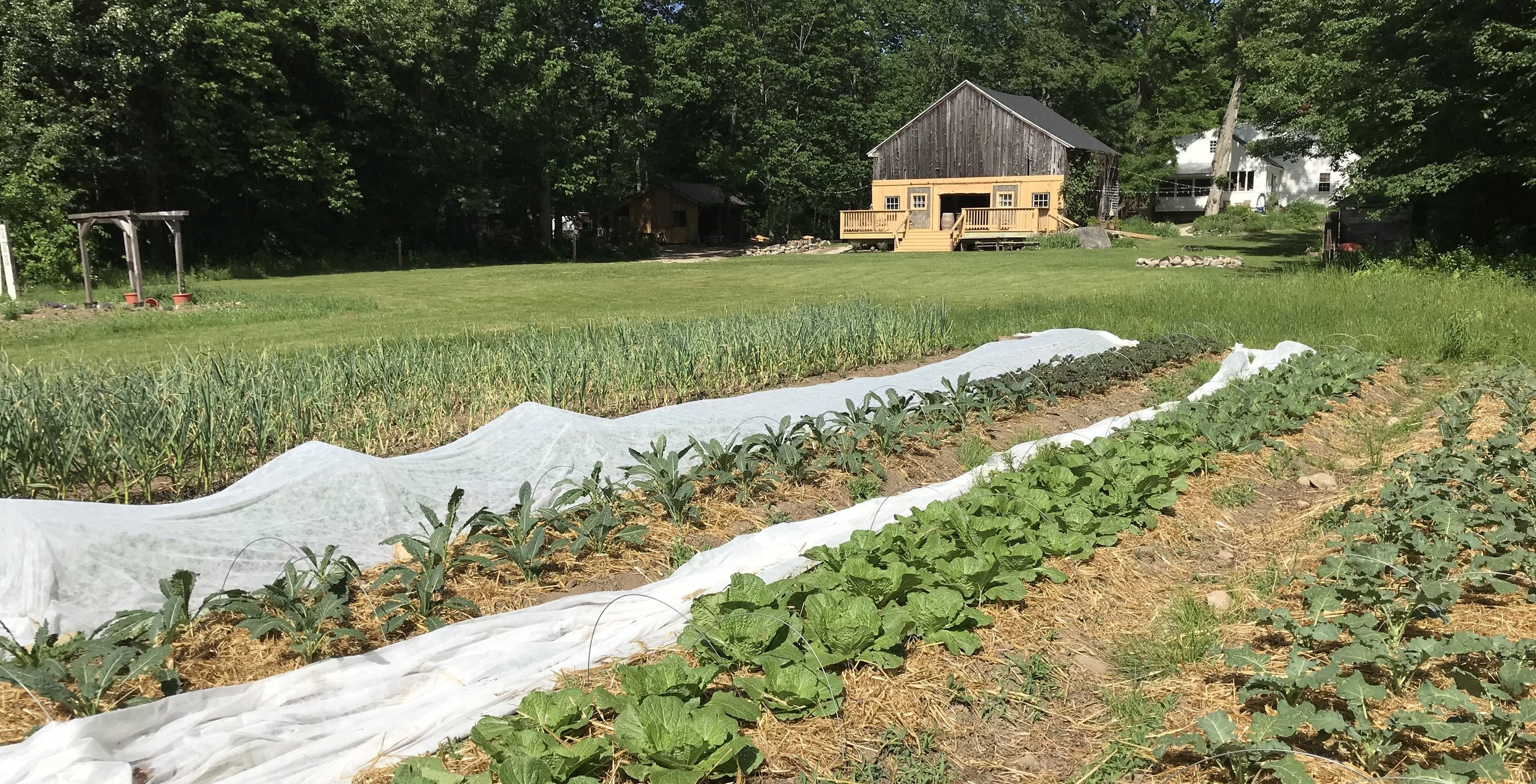 Straw mulch and that beautiful finished deck off the back of the barn!