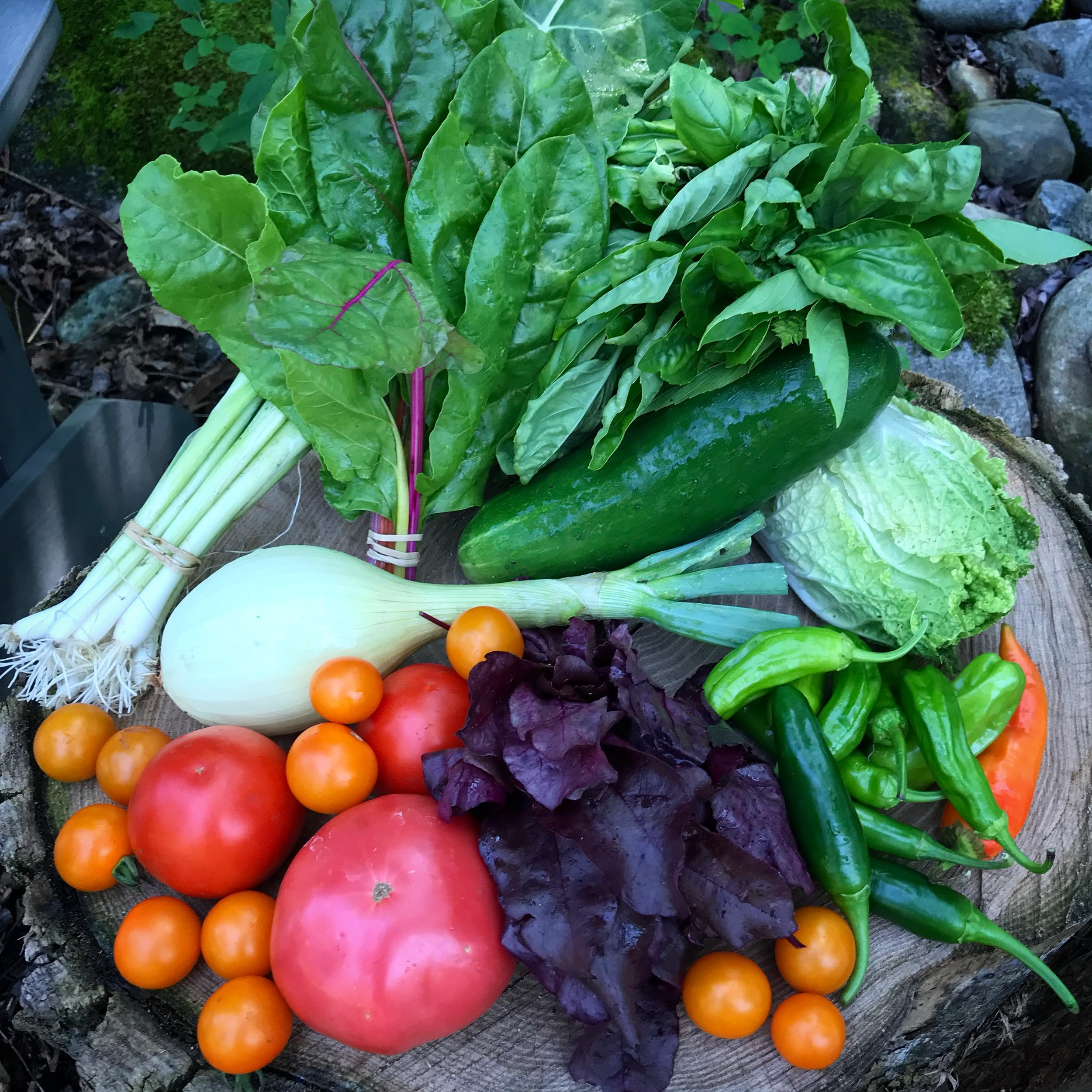 Last week's CSA and the debut of tomatoes in the CSA!