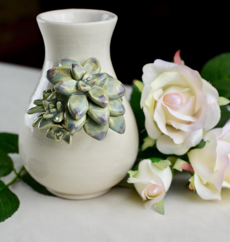 Succulents -