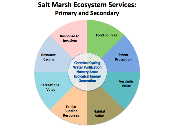 Considerations for Evaluating a Salt Marsh   Lateral Image, created by Jamie Fitzgerald