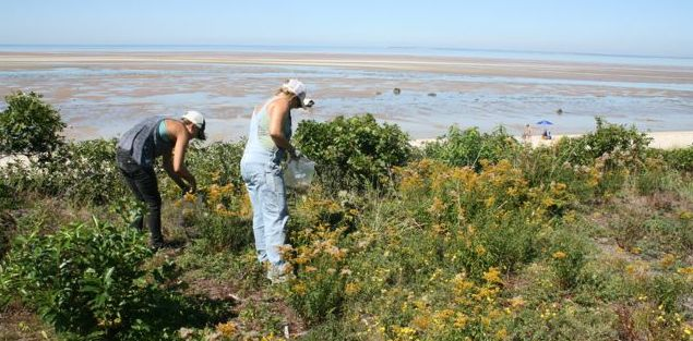 Coastal Restoration Project, native seed collection.