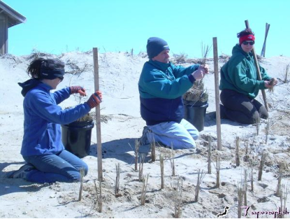 TALILLA SCHUSTER, DENNIS MINSKY AND RACHAEL SEVANICH PLANT DUNE GRASS IN GROUPS OF THREE CULMS (STEMS) ON ONE FOOT CENTERS, ON THE FACE OF THIS RESTORED DUNE, IN MARCH.