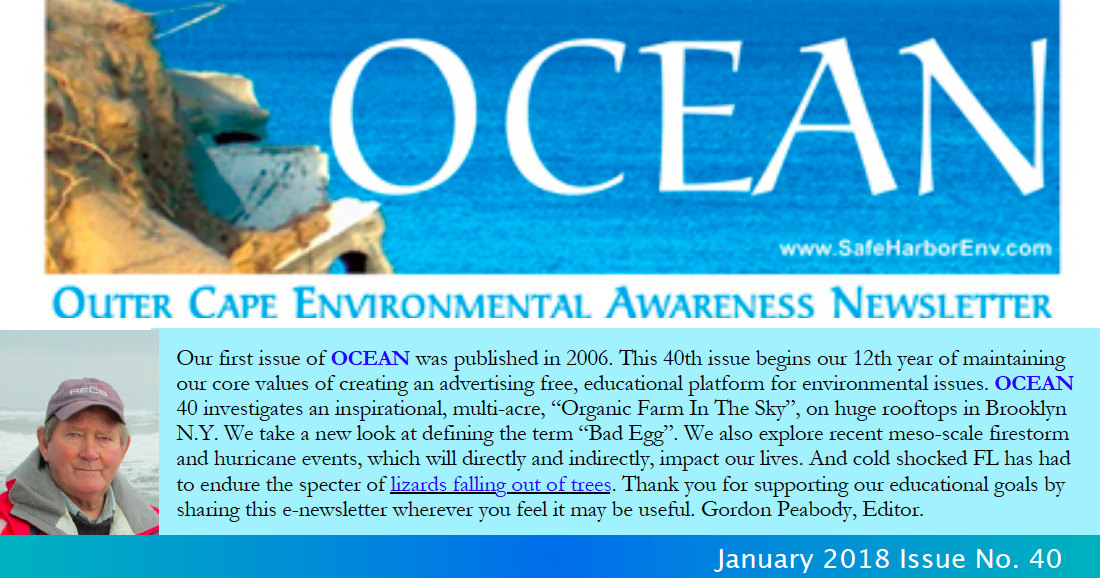 OCEAN40pic.png