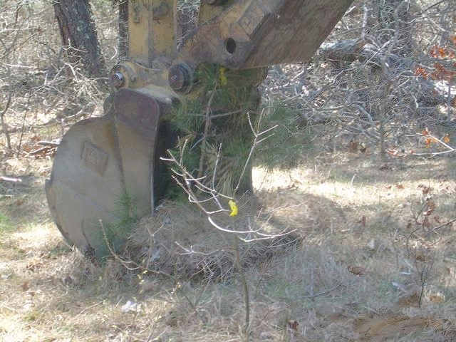 Excavation equiptment is used to recover larger native woody specimens.