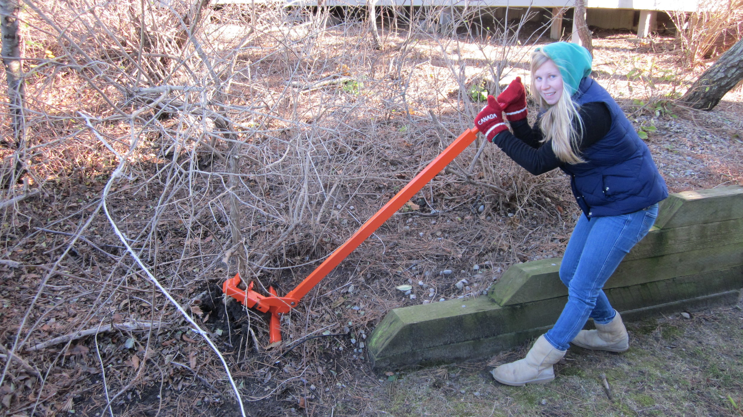 Safe Harbor  field team  member, Audra works with a 'Weed Wrench' to remove invasive vegetation.
