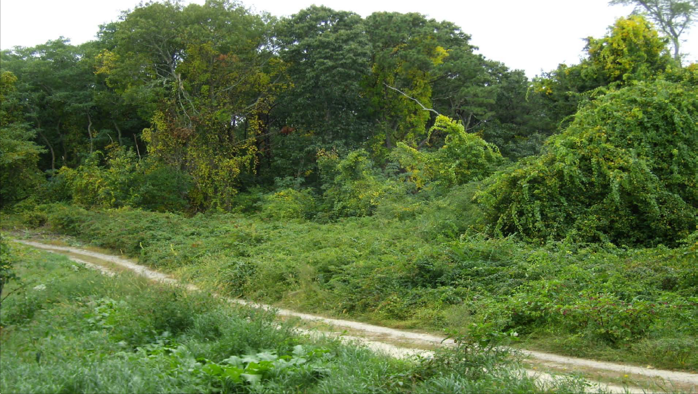 Invasive Plants can take over an area quickly, overwhelming native species.