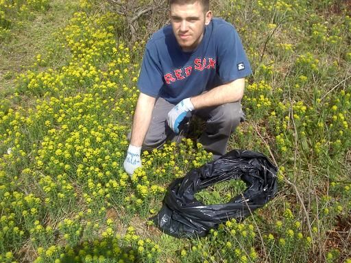 Safe Harbor workers are trained to remove Cyprus Spurge with gloves to avoid skin contact with sap.